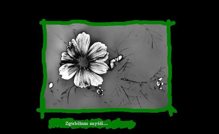 KWIAT NA PUSTYNI OBRAZKI GIFY - Yahoo Image Search Results