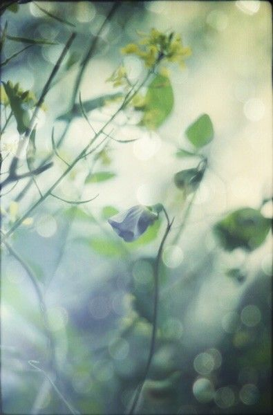 Original fine art dreamy nature photograph  Follow by InmostLight, $22.00