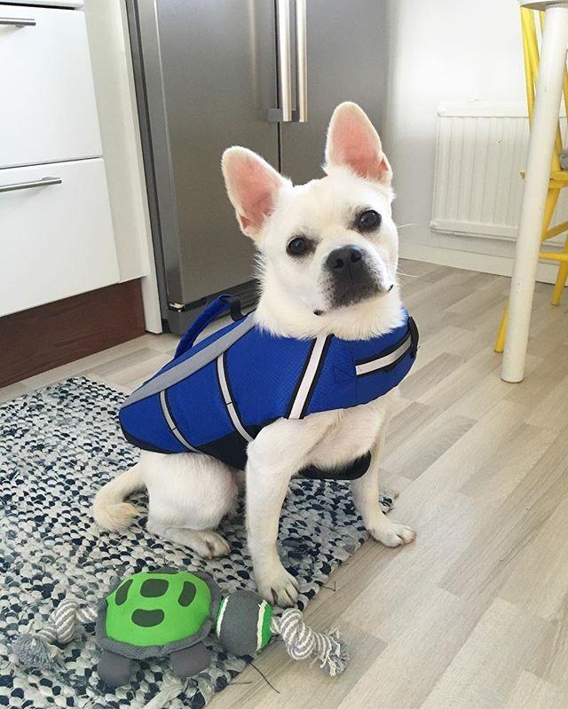Ready for a swim! #HookedOnHööks I www.hookseurope.com I seppothedog