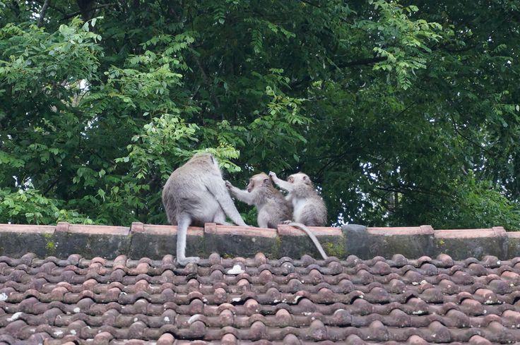 Monkey Forest Ubud - Bali