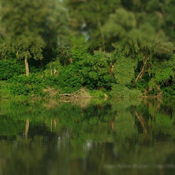 Kőtelek, Tisza part, ártér, erdősáv, idilli táj. Viharvadászatból tiszai sétává lett kirándulás eredménye. #river #water #mirror #nature #mik #mik_nature #termeszet #folyo #green #trees #instamood #atmosphere #dslr #pentax #summer – blogisztan az Instagramon