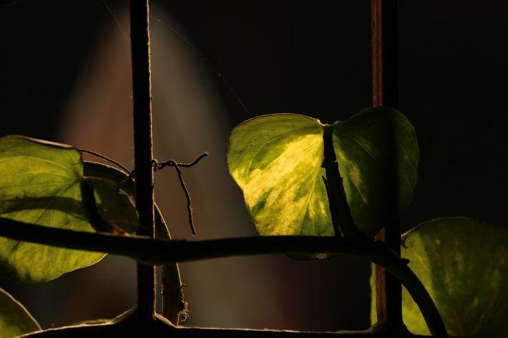 Untitled_1 by Tirtha Banerjee