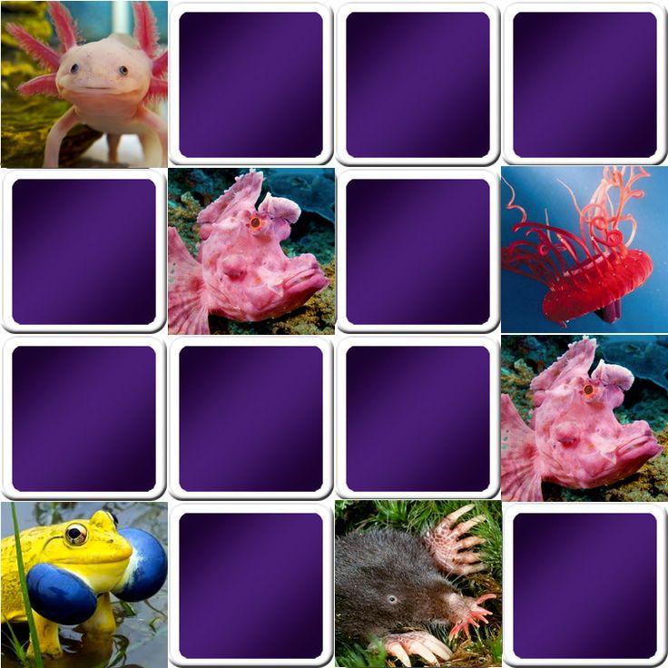 Play memory game for seniors Strange animals Online