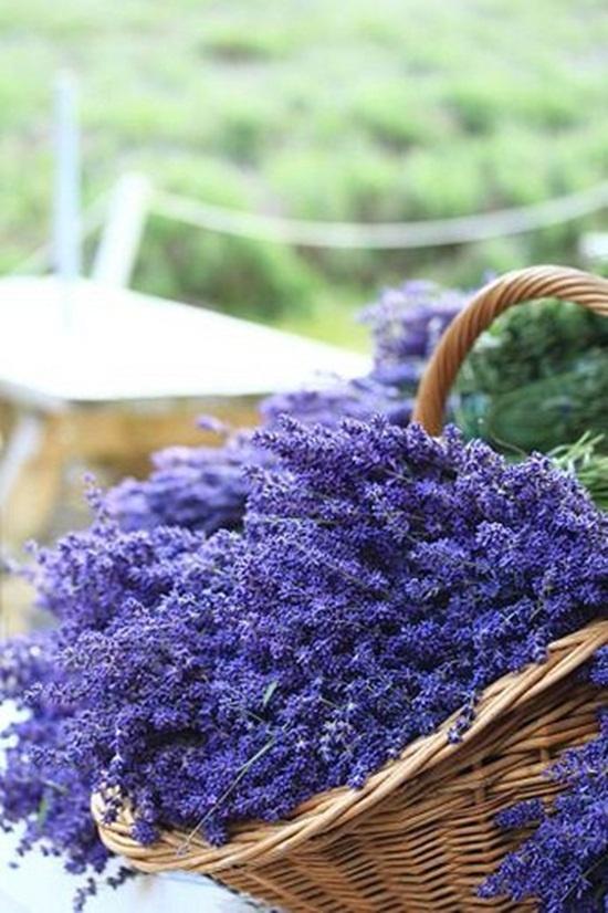 Открытка с цветком лаванды, поздравление лет