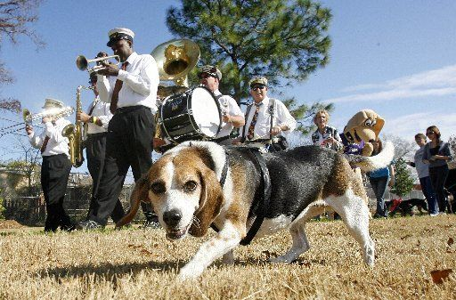 Guide to dog parks and runs in the New Orleans area