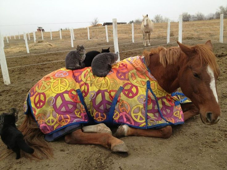 18 Horses You Can't Believe Are Even Real