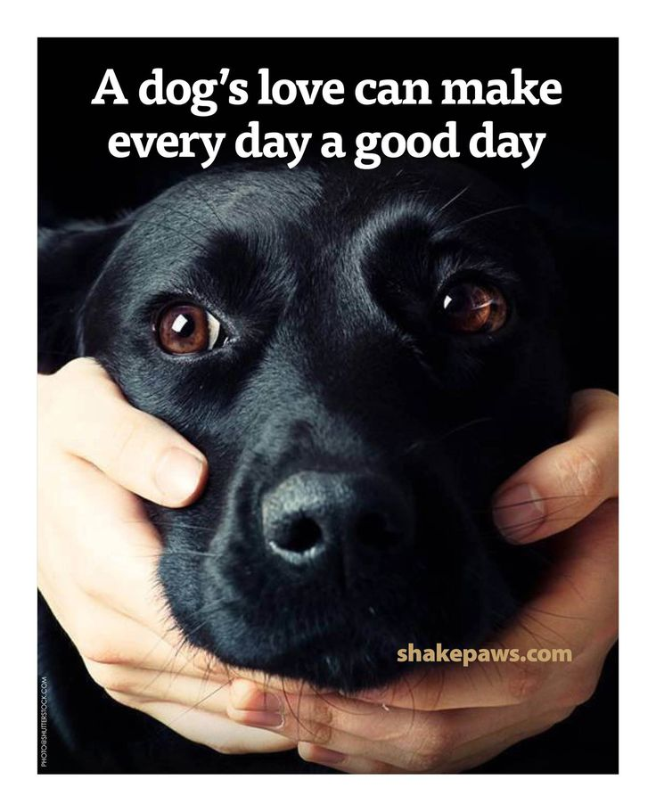 Pin By Peggy Crowe On Man S Best Friend Black Labrador Dog Dog Love Black Lab Puppies