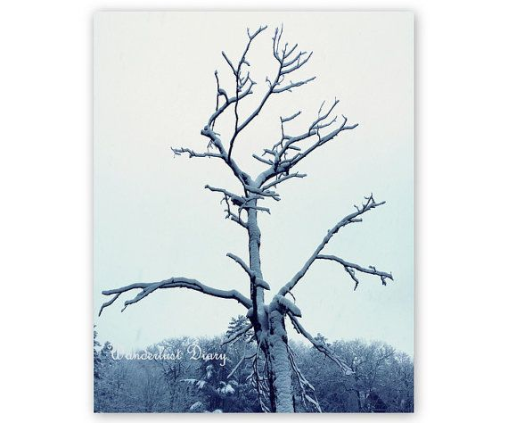 Snow topped trees lining the Muskoka Lakes in Ontario, Canada