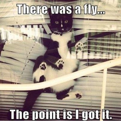 And this would be the reason all my blinds have to stay half way up all the time!