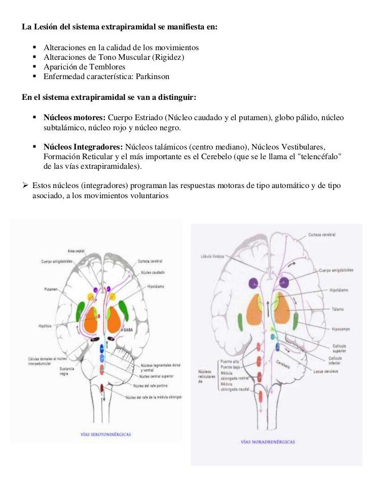 Sistema Extrapiramidal:Vía Motora de movimientos asociados y Semivoluntarios.</li></ul>¿Que son Sistemas Motores?<br /><u...