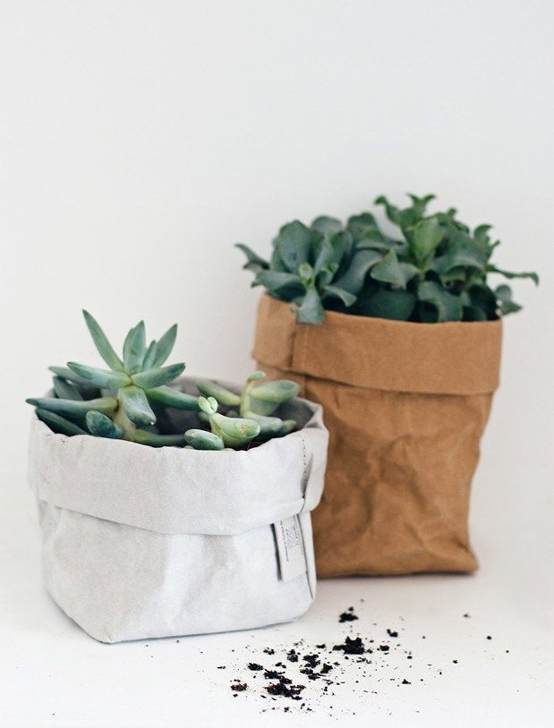 Succulents in Uashmama paper bags | Urban Jungle Bloggers - a green gift | These Four Walls blog