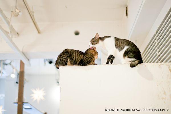 福岡のネコカフェキューリグの日常 - ○○しゃしんのじかん    http://blog.goo.ne.jp/moriken_photo/