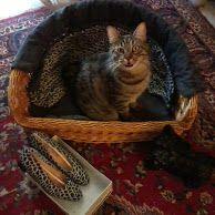 Pet's Accessori artigianali per animali domestici e da compagnia personalizzati.  Info what's app al 347/3935091 E.mail accessori.moda@alice.it giovannasc1964@gmail.com