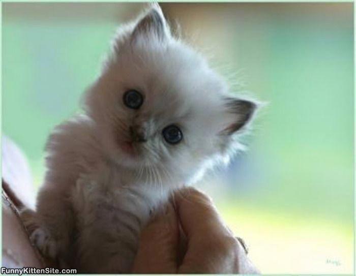 New Cute Baby Animals Wallpaper Hd Cute Animals In Movies #cutestcatsandkittensever 3