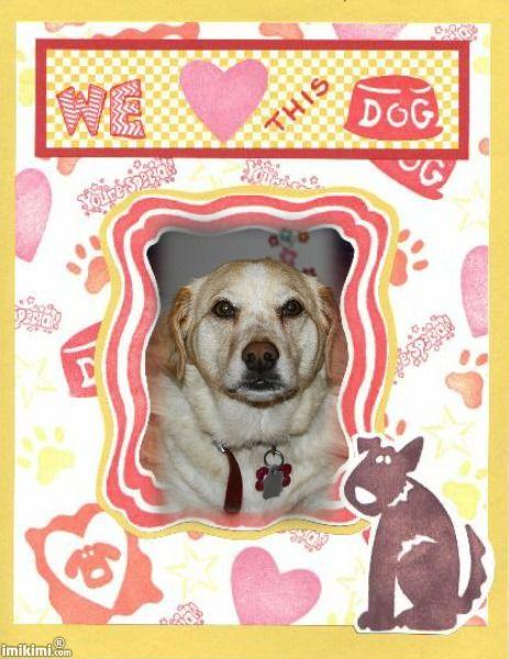 We Love This Dog!!