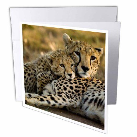 3dRose Cheetah with cub in the Masai Mara GR, Kenya-AF21 JMC0167 - Joe and Mary Ann McDonald, Greeting Cards, 6 x 6 inches, set of 6