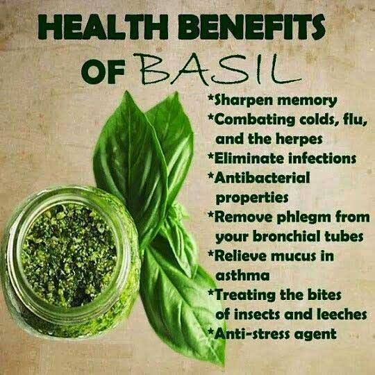 Basil Health Benefit - Eating Healthy Food - It has antioxidant, anti-inflammatory and antibacterial properties which, along with its high nutritional value, has made basil a popular herb in both cooking and for medicinal use.