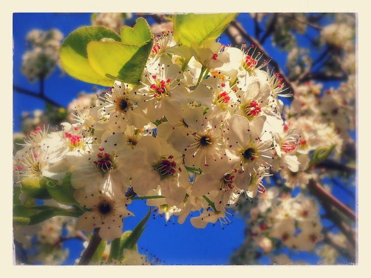 Flowers foto di Morgan Capasso