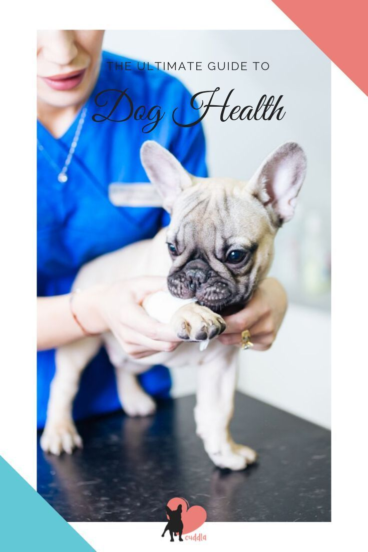 Pin On Dog Care Guide