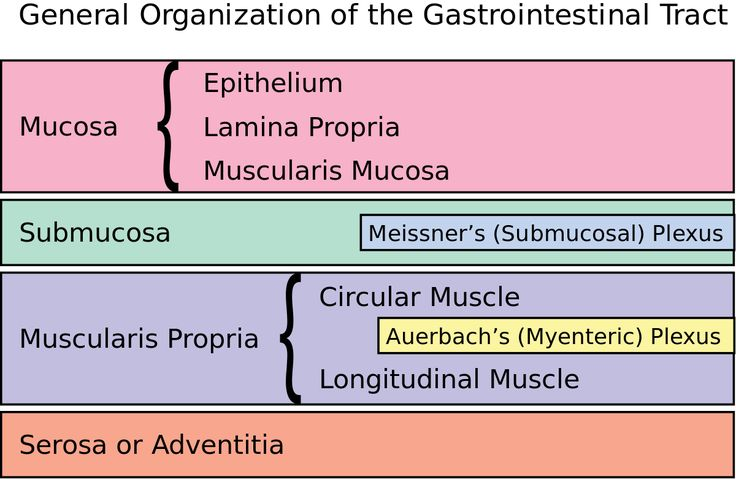 TIL the Enteric Nervous System in your gastrointestinal tract contains more neurons than the spinal cord (and about 2/3 as many as are found in the whole nervous system of a cat)