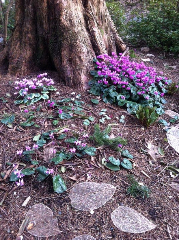 Planting Under Deciduous Trees : Under the shade tree on trees landscape around and