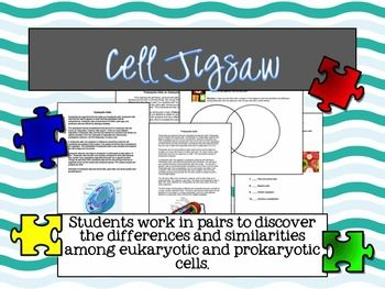 Freebie- Jigsaw activity on cell type (eukaryotic vs. prokaryotic). Students team up to complete the jig saw and then fill out venn diagram comparing and contrasting the types of cells.