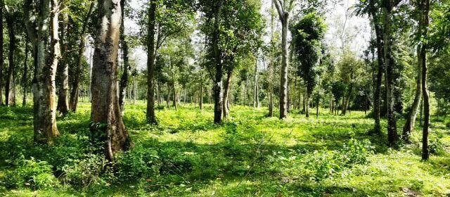 Agricultural land for sale in Somwarpet,Karnataka,land for sale,buy land,search land