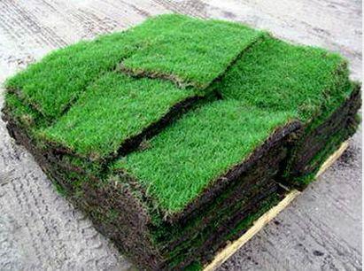 THE GRASS MAN - Grass for Sale