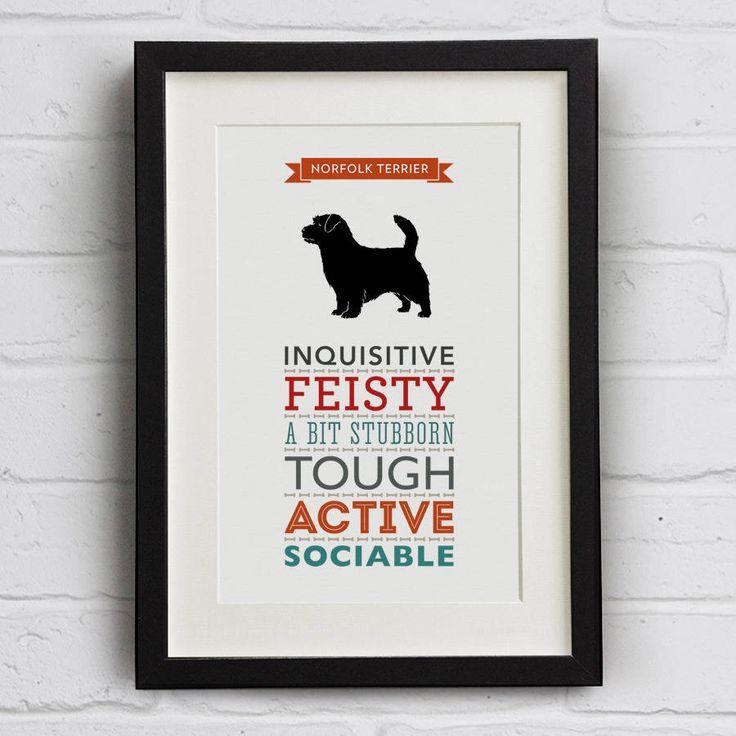 Norfolk Terrier Dog Breed Traits Print