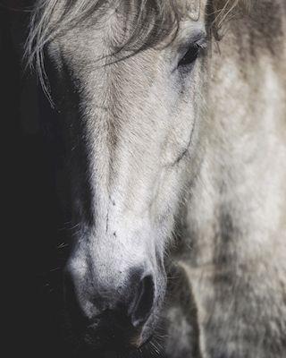 Sandra Linnell - Kindred spirit, photograph, horse