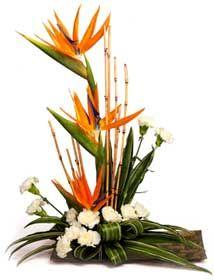 bird of paradise flower arrangement - Bing Images