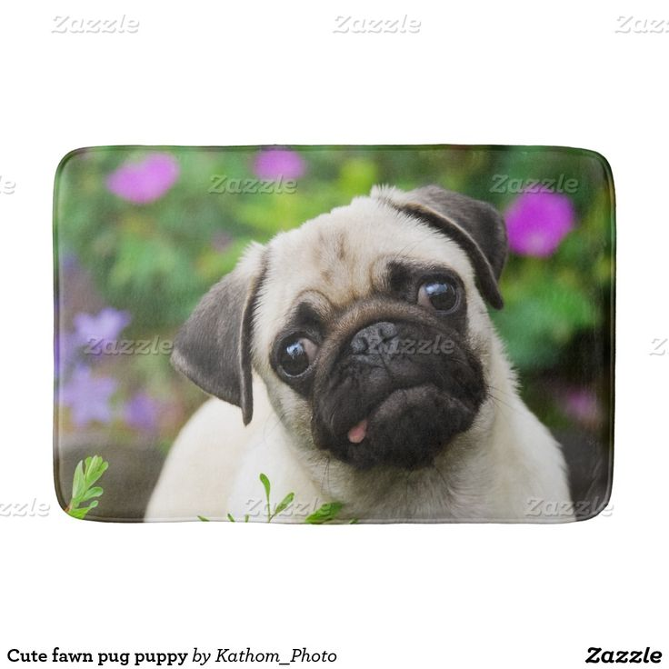 Cute fawn pug puppy bath mats