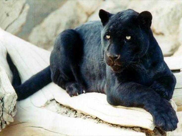 Miao Mini Zoo - in Arunachal Pradesh, India