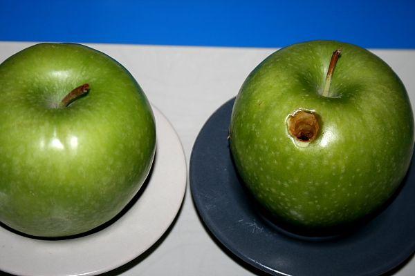 """Insegnare l'igiene orale – esperimento della mela """"cariata""""   Lapappadolce"""