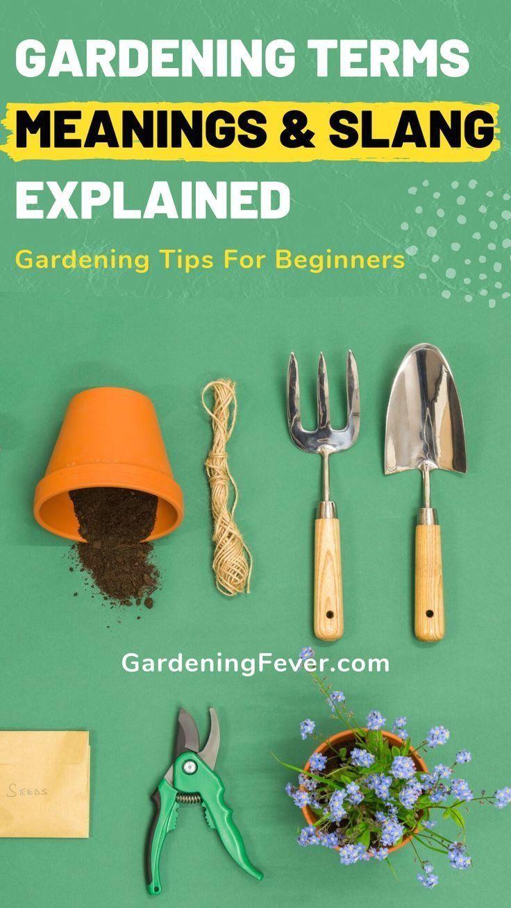 Gardening Terms Meanings Slang Explained Gardening Fever 1000 In 2020 Gardening Tips Growing Vegetables Tips