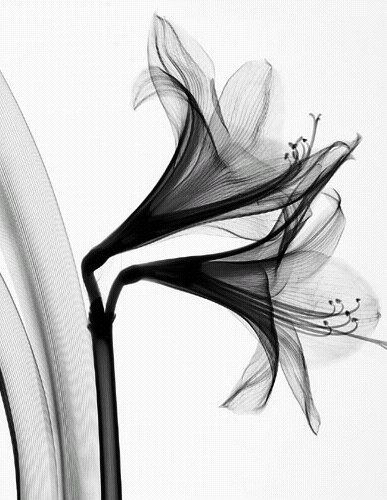 X Ray Line Drawing : Best black white tattoos ideas on pinterest