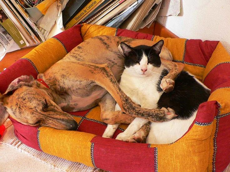 BuddiesFood Food, Cat Hug, Sweetyummi Food, Animal Adorable, Furries Friends, Adorable Pets, Food Photos, Delicious Food, Sweetgreat Food