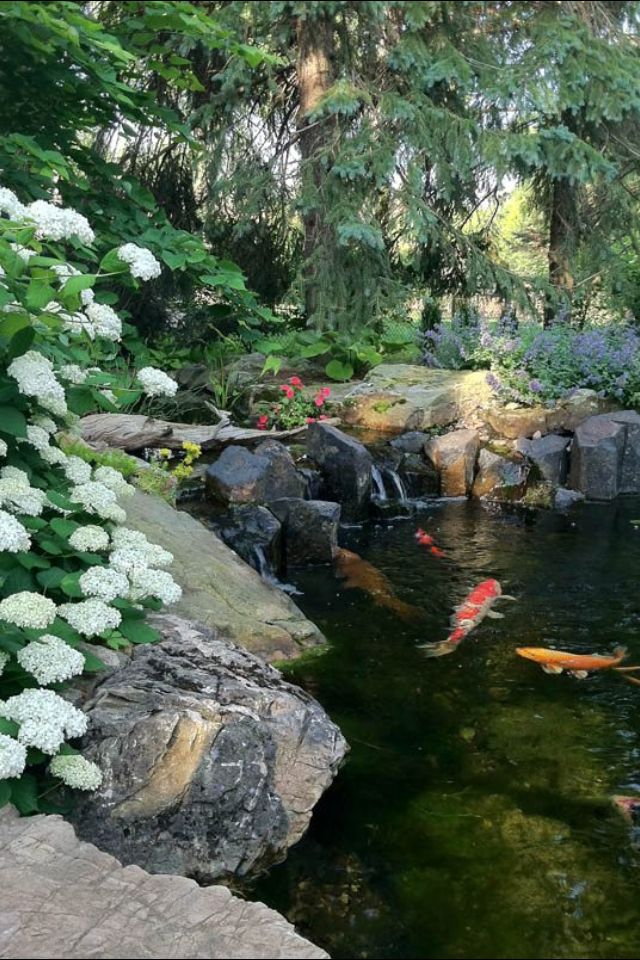 646 best water gardens water features goldfish and koi for Koi ponds and gardens