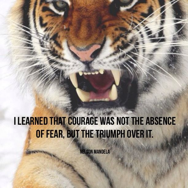 I learned that courage was not the absence of fear, but the triumph over it.