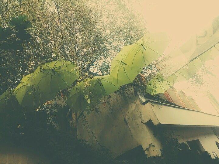 #tree #umbrella #street #art