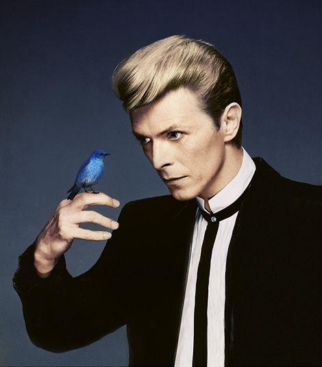 Flora Borsi, Blue Bird - Tribute to David Bowie on ArtStack #flora-borsi #art