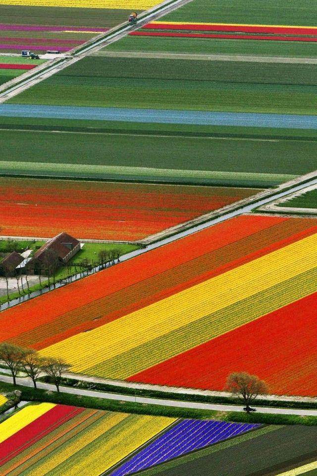 Aerial-View-Of-Tulip-Flower-Fields-960x640.jpg 640×960 pixels