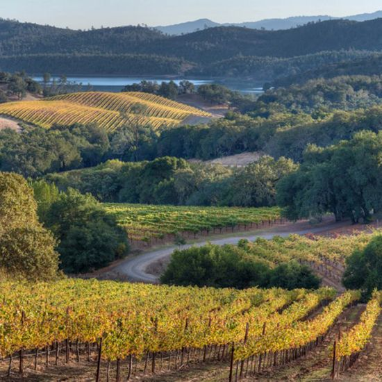 Food & Wine's recommendations on Best Napa Valley Wineries to Visit- Buehler Vineyards