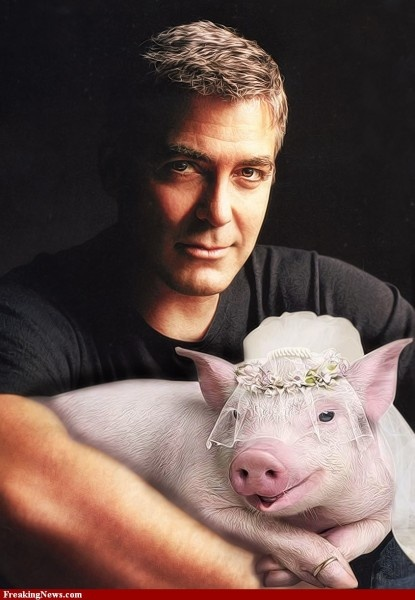 Pot-Bellied Pigs Are Hollywood's Secret Pet! Ask George Clooney Why…