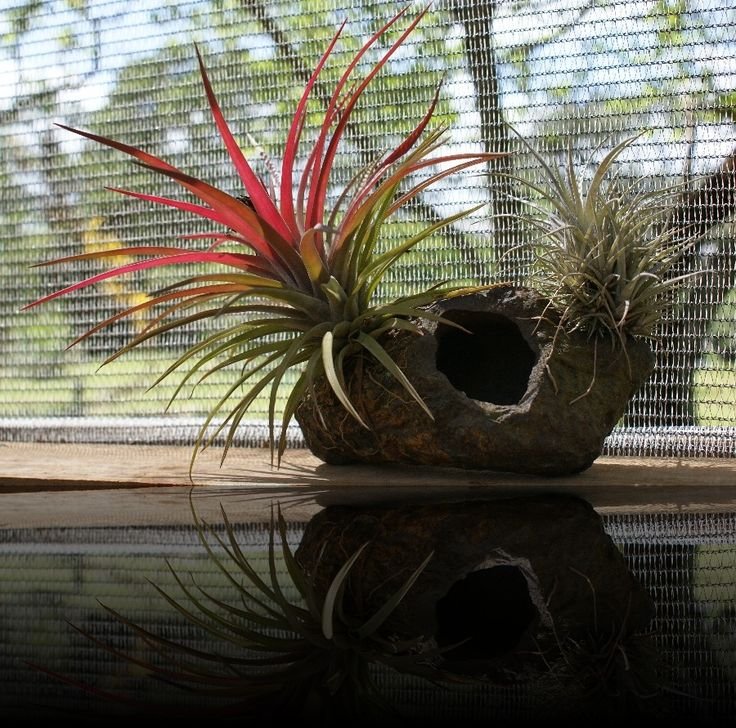 Air plants- creative displays | Gallery | Rare and Air