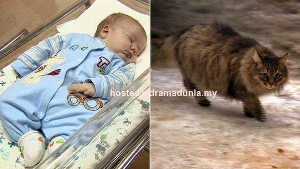 Inilah Kucing Yang Memanaskan Badan Bayi Yang Dibuang Dalam Kotak Dari Mati Kesejukan - Drama Dunia