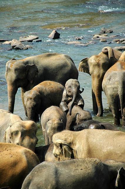1319 Best Elephants - Gentle Giants Images On Pinterest -8991