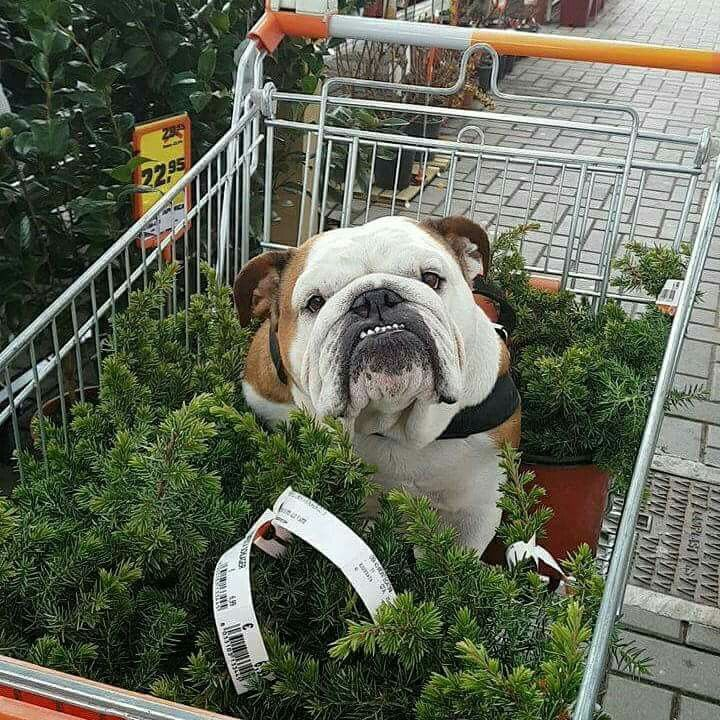 Shopping with bully