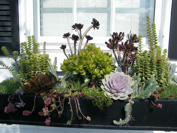 Tips for Succulent Gardening in Window Boxes | Gardening and Home Decor Blog from Hooks & Lattice