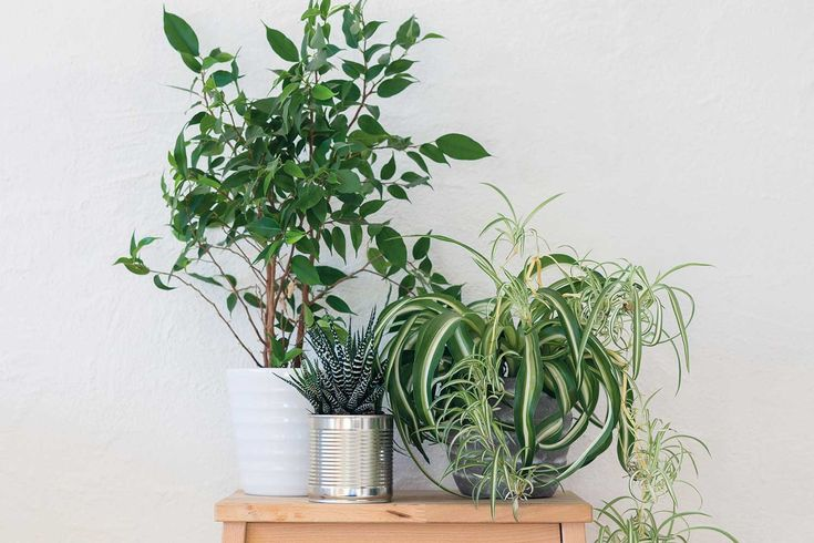 Three houseplants that will be happy in the kitchen